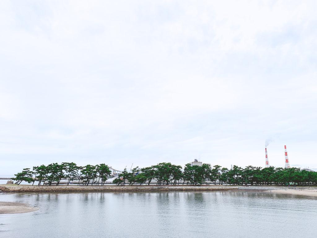 向島公園現地視察。